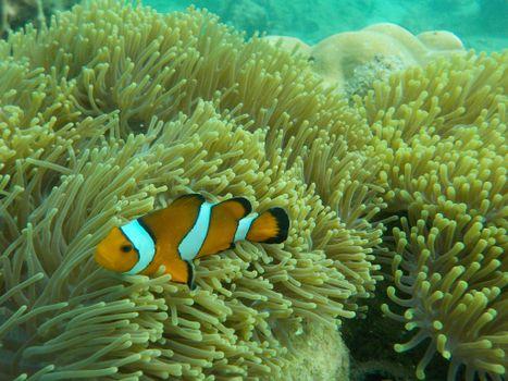 Заставки морское дно, подводный мир, водоросли