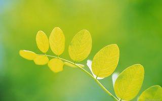 Заставки ветка,листья,зеленые,прожилки,фон зеленый