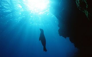 Фото бесплатно море, риф, морской котик