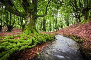 Бесплатные фото Otzarreta,Bizkaia,Spain,лес,речка,деревья,пейзаж