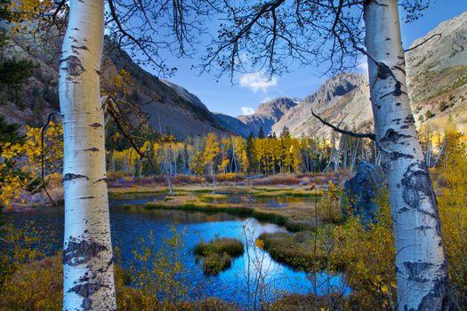 Бесплатные фото Beaver pond at Lundy Lake,осень,горы,деревья,озеро,пейзаж