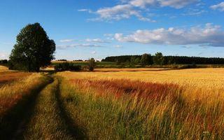 Бесплатные фото дорога,поле,трава,колосья,кустарник,деревья,небо