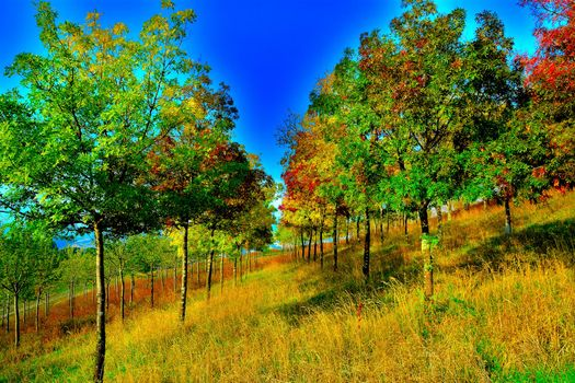 Фото бесплатно осень, холм, косогор