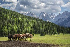 Фото бесплатно деревья, пейзаж, лошади