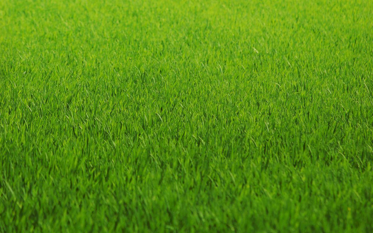 Фото зеленая трава газон крупный план - бесплатные картинки на Fonwall