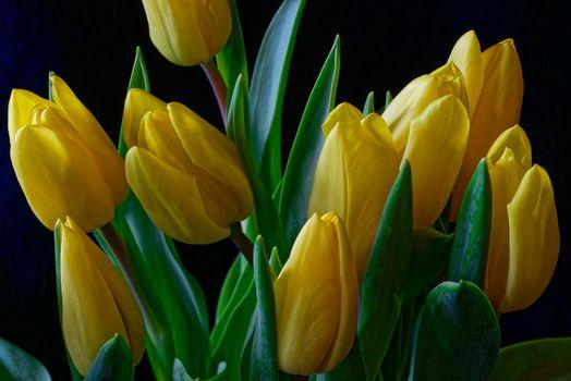 Заставка цветы, флора на андроид