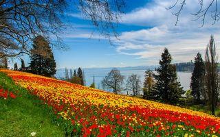 Бесплатные фото красивое,цветочное,поле,красные,желтые,цветы,холм