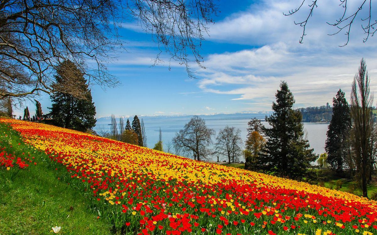Фото бесплатно красивое, цветочное, поле, красные, желтые, цветы, холм, озеро, деревья, цветы