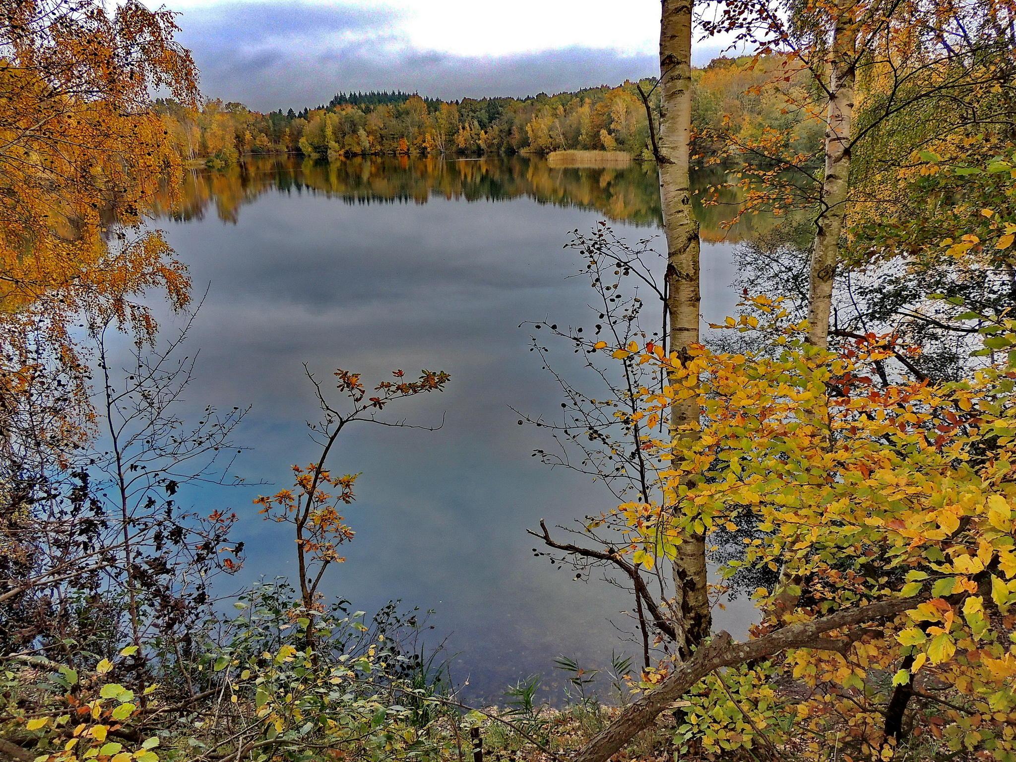 Обои осень, озеро, деревья, пейзаж