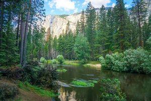 Фото бесплатно Йосемитский национальный парк, лес, пейзаж
