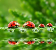 Photo free ladybugs, summer, dew
