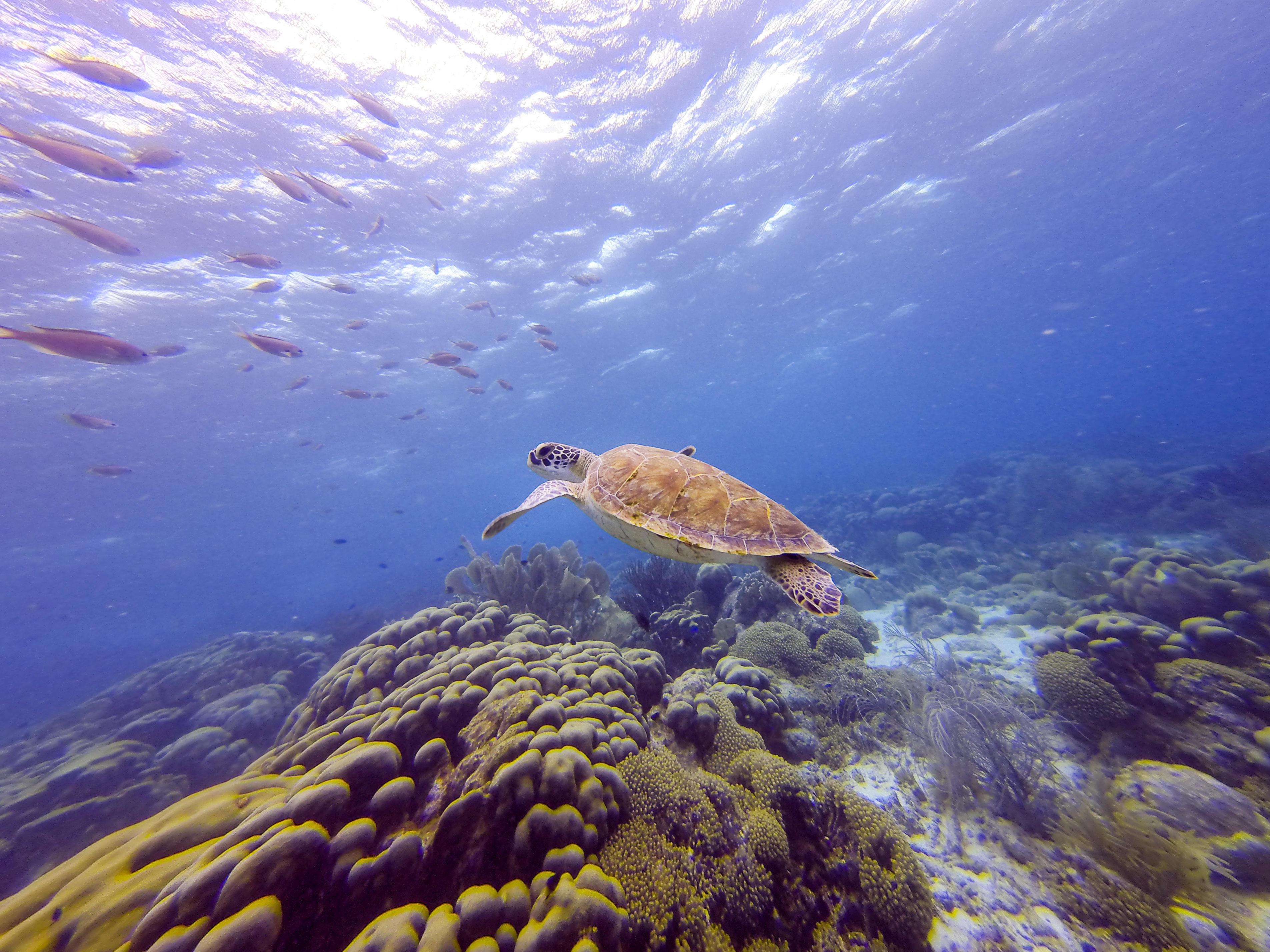 Обои море, морское дно, черепаха