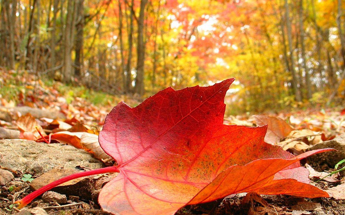 Фото бесплатно осень, земля, листья, камни, трава, деревья, природа