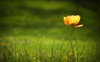 Бесплатные фото цветок,лепестки,оранжевые,стебель,трава,зеленая