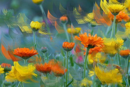 Фото бесплатно Цветочная композиция, цветок, цветы
