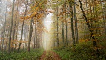 Бесплатные фото осень,лес,деревья,дорога,туман,пейзаж