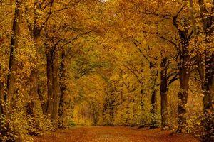Бесплатные фото осень,парк,деревья,дорога,лес,природа,пейзаж