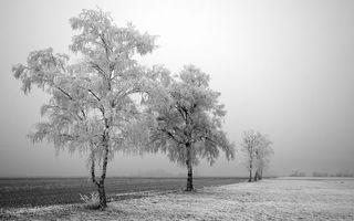 Бесплатные фото зима,поле,пахота,трава,деревья,ветви,иней