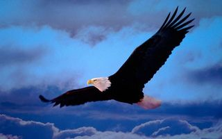 Бесплатные фото небо,облака,орел белоголовый,крылья,хвост,перья,полет