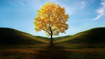 Бесплатные фото одинокое дерево,осень,поле