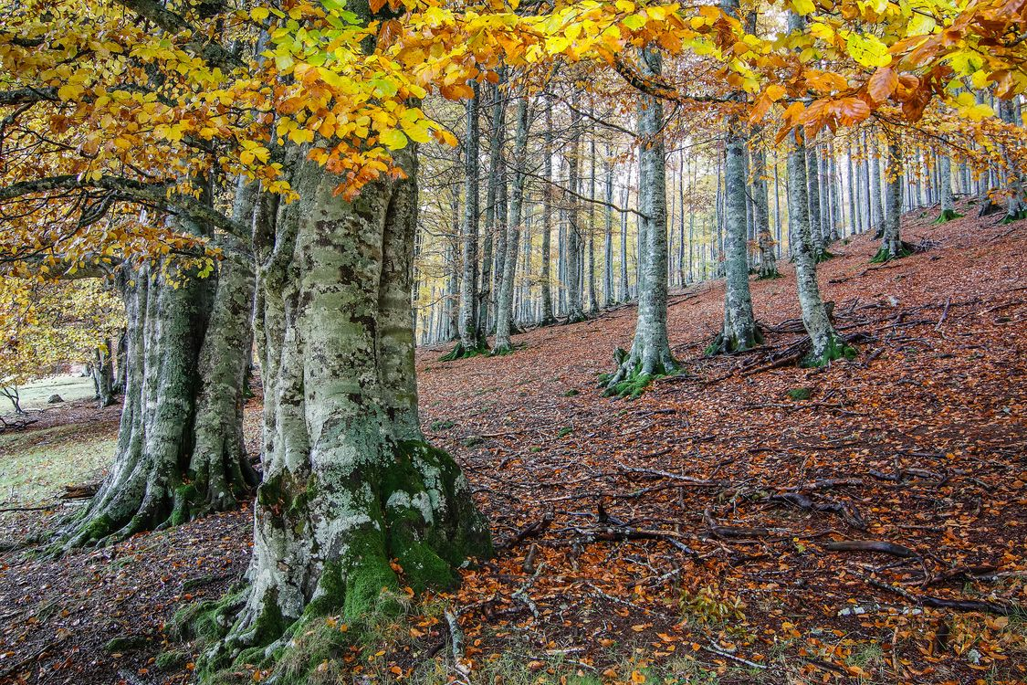 Free download nature, autumn screensaver