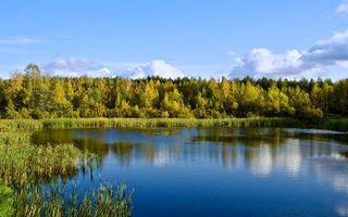 Фото бесплатно озеро в лесу, деревья, солнце