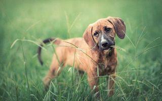 Бесплатные фото пес,морда,уши,лапы,хвост,трава