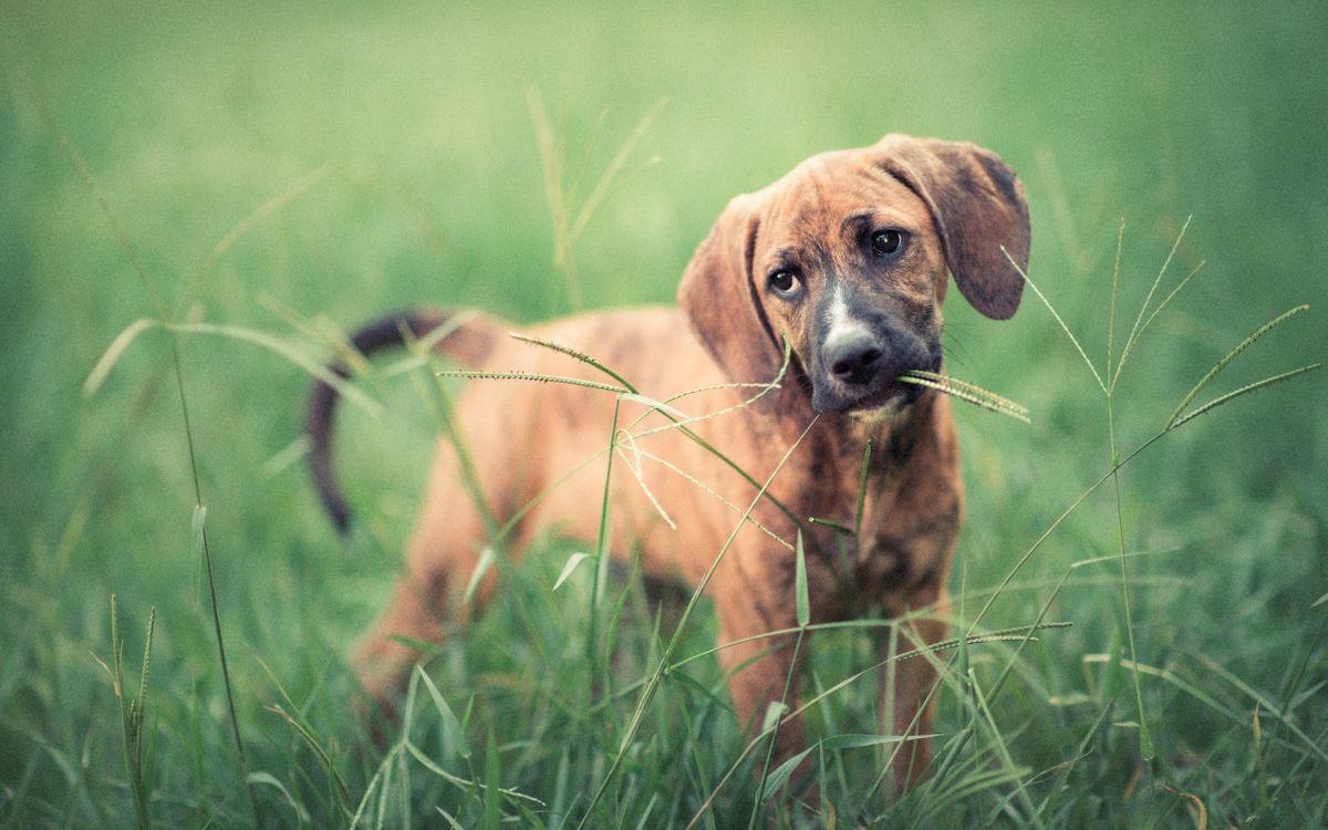 Фото бесплатно уши, собака, трава - на рабочий стол
