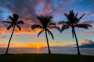 Фото бесплатно закат, море, пальмы, пейзаж
