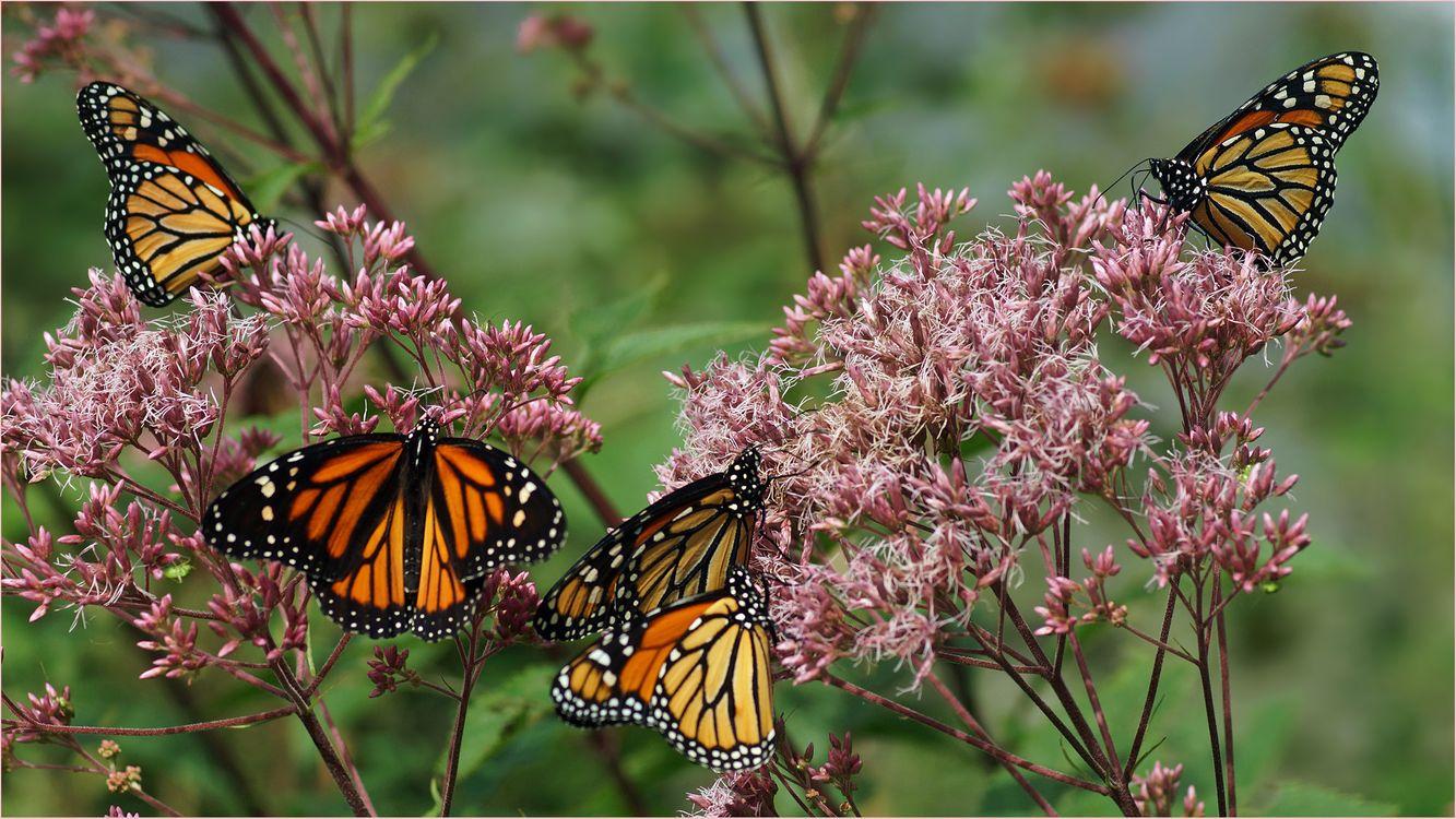 Фото бесплатно бабочка, цветок, цветы, флора, макро, насекомые