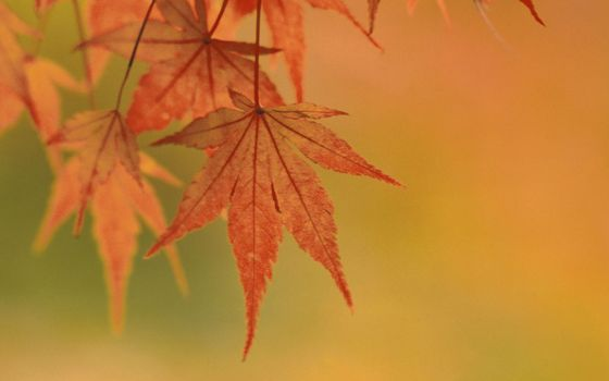 Photo free yellow, background murky, leaves