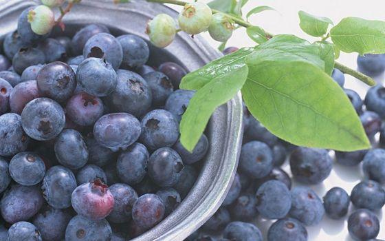 Бесплатные фото ягода,черника,чашка,ветка,листья