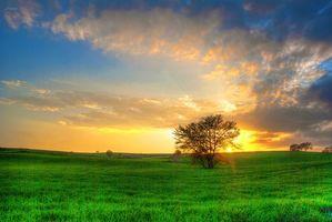 Бесплатные фото закат, поле, деревья, пейзаж