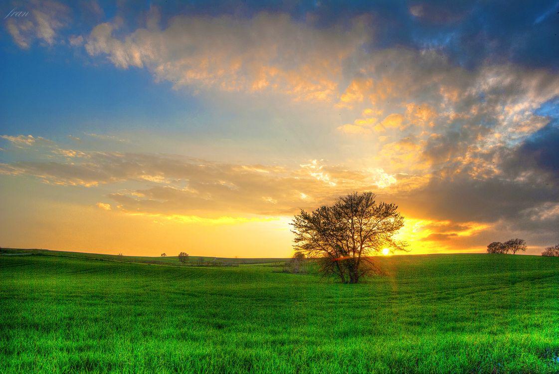 Картинка закат, поле, деревья, пейзаж на рабочий стол. Скачать фото обои пейзажи