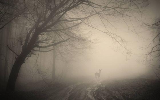 Фото бесплатно осень, дорога, грязь, молодой олень, туман, деревья