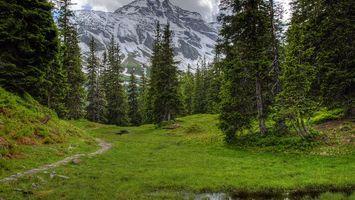 Фото бесплатно трава, тропинка, камни, деревья, горы, снег