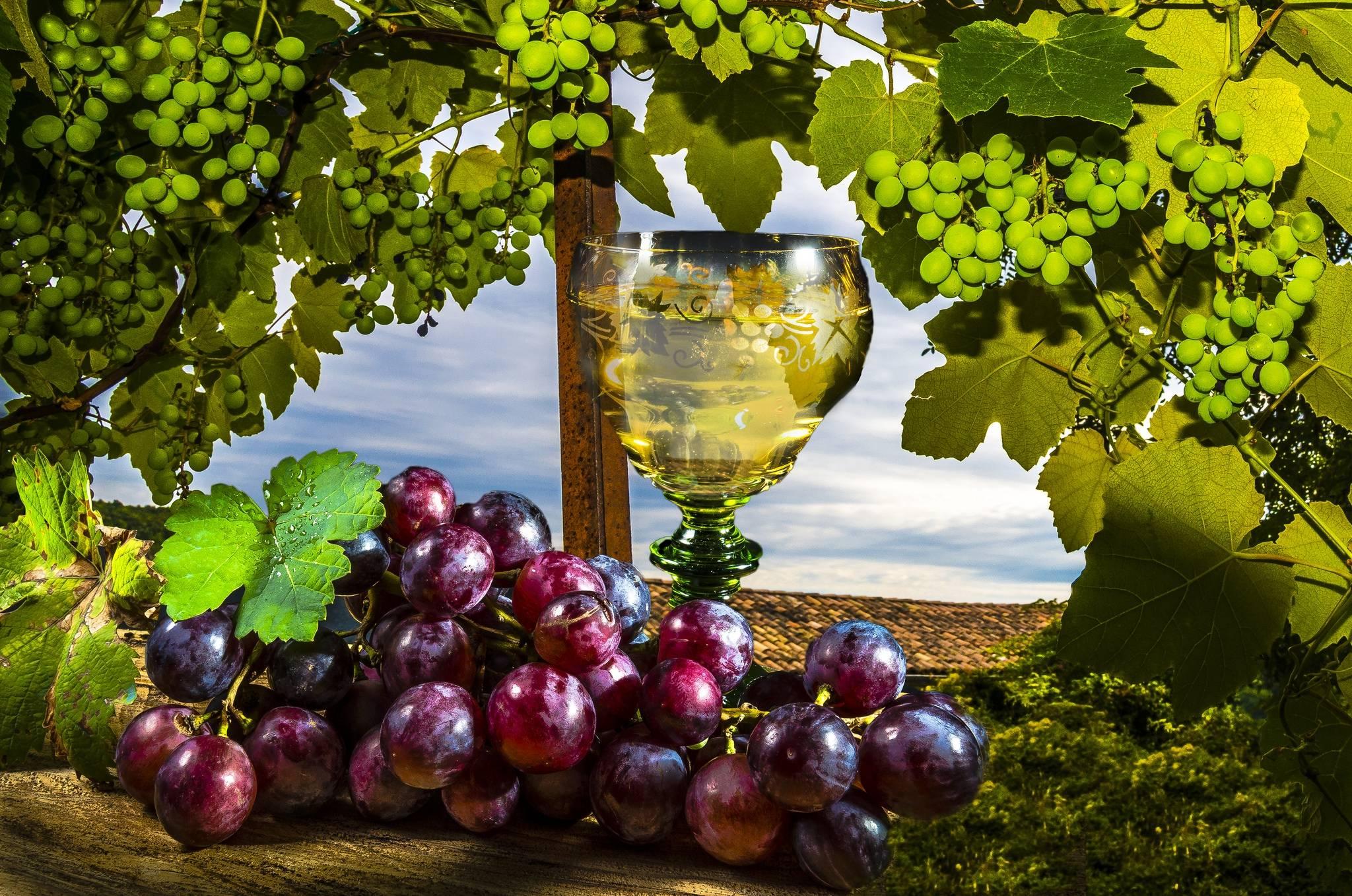 vinograd-bokal-vino-natyurmort.jpg