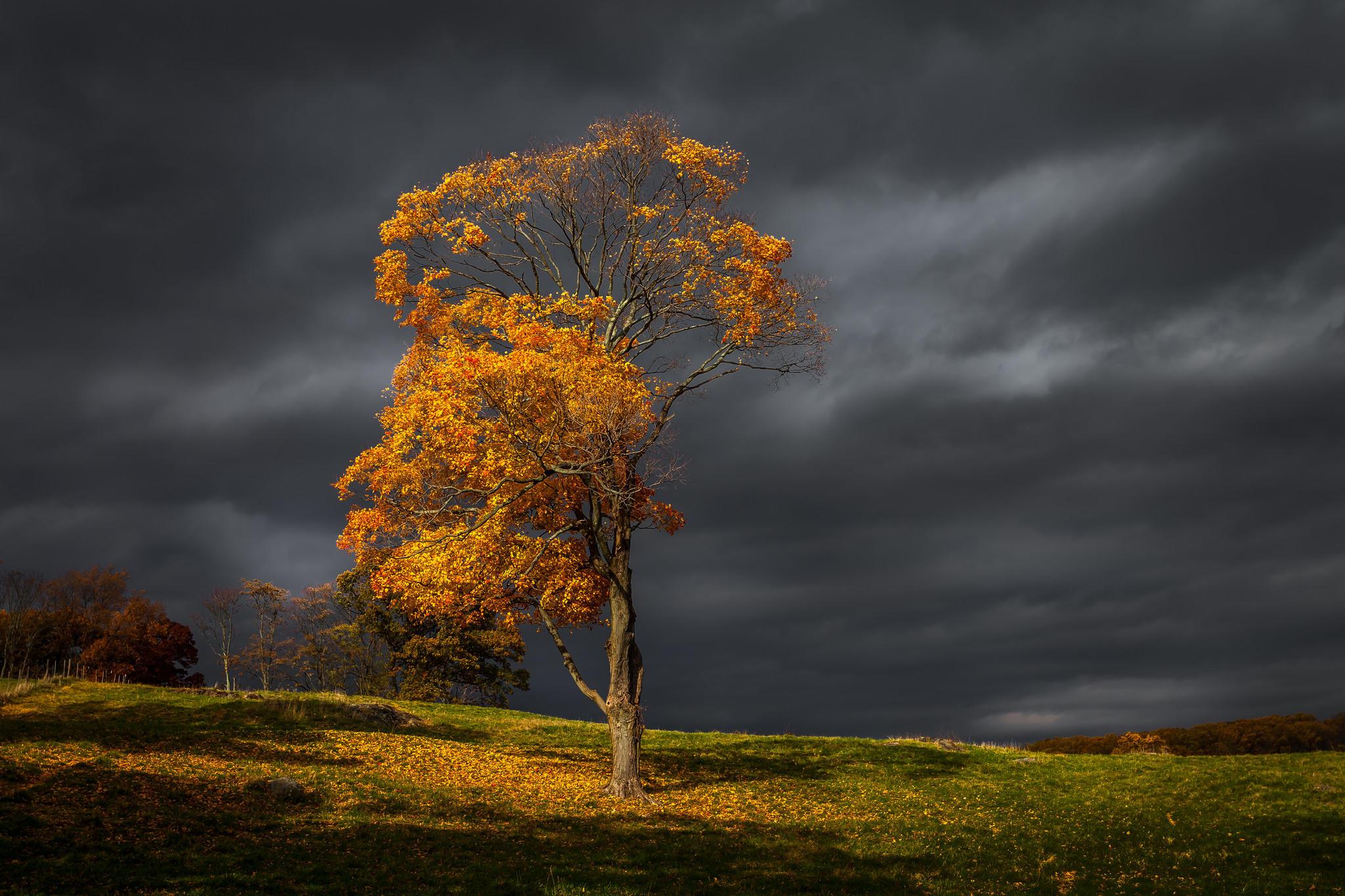 раз пасмурная осень фото чтобы был