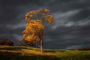 Бесплатные фото закат, осень, тучи, поле, холмы, дерево, пейзаж