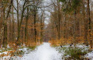 Бесплатные фото дорога,лес,деревья,природа,пейзаж