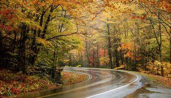 Бесплатные фото Осень, дорога, лес, деревья, пейзаж