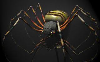 Бесплатные фото паук,лапы,глаза,макро