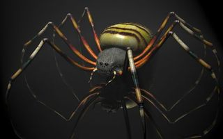 Фото бесплатно паук, лапы, глаза
