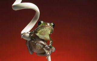 Фото бесплатно провод, белый, лягушка