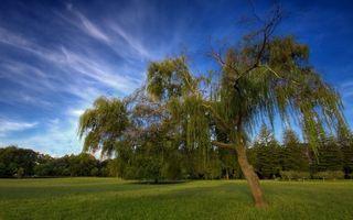 Фото бесплатно лето, поле, трава, деревья, небо, облака
