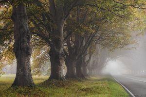 Фото пейзаж, дорога в хорошем качестве