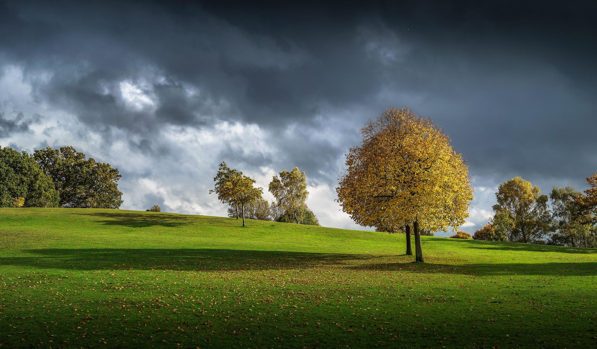 Обои холмы, осень, деревья, поле