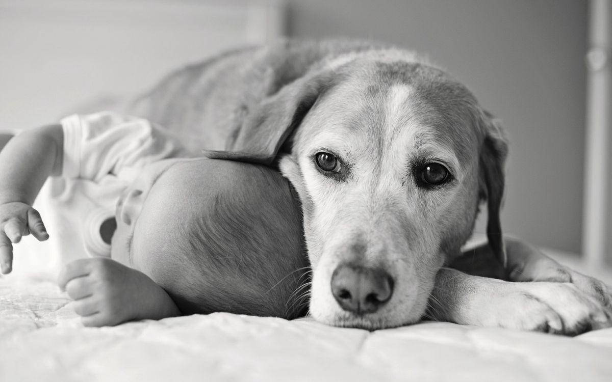 Фото бесплатно малыш, ребенок, собака, друзья, кровать, черно-белое, разное