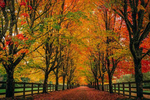 Бесплатные фото Сноквалми,Вашингтон,парк,дорога,осень,деревья,пейзаж