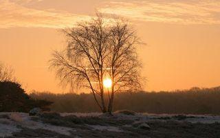 Заставки трава,снег,кустарник,деревья,небо,солнце,закат